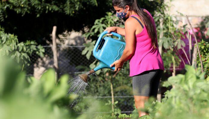 Projeto de horta comunitária sem agrotóxico melhora qualidade de vida da população de Limoeiro