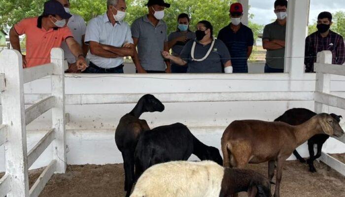 Em Limoeiro, curso de caprinocultura oportuniza geração de renda no campo