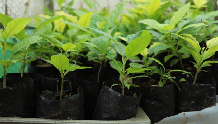 Limoeiro celebra Dia da Árvore com plantio de mudas e conscientização de preservação